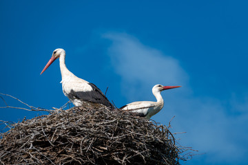 a couple of storks are standing in a nest when the weather is nice and the sky is blue