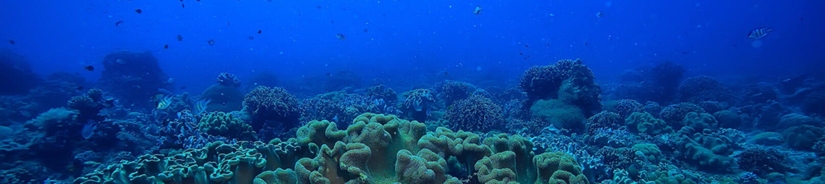 marine ecosystem underwater view / blue ocean wild nature in the sea, abstract background