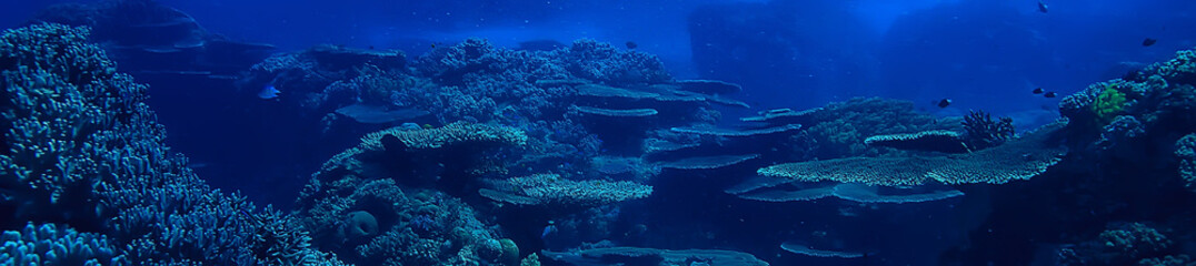 Photo Blinds Coral reefs underwater scene / coral reef, world ocean wildlife landscape