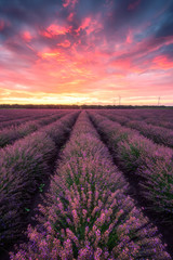 Lavender field at sunrise / Stunning view with a beautiful lavender field at sunrise