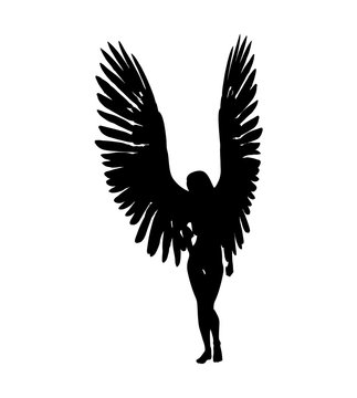 Female angels silhouette on white background