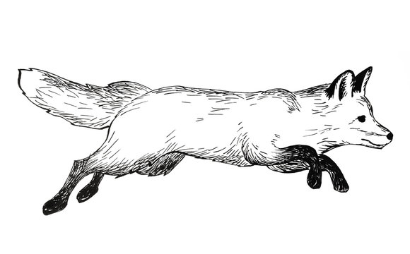 Pencil illustration, hand graphic. Jumping fox