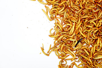 worm animal wiggle on the floor. wildlife life focus