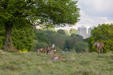 Balade à Richmond Park - Londres HD Photos