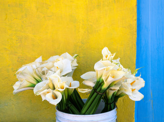 Calla lily flower in bucket near yellow wall