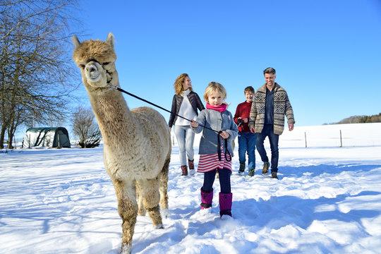 Family walking with alpaca on a field in winter