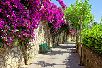 Vibrant purple flowers lining a walkway with bench on the beautiful island of Capri, Italy