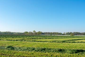 Frisch gemähte Wiese mit schönem blauem Himmel. Standort: Deutschland, Nordrhein - Westfalen, Borken