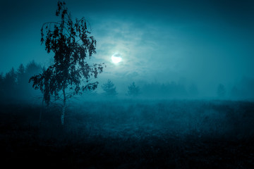 Mysterious landscape in cold tones - silhouettes of the trees on the night meadow under the full moon and dramatic night cloudy sky. Fotoväggar