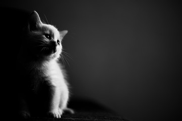 cat in front of black background