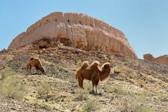 The largest ruins castles of ancient Khorezm – Ayaz - Kala, Uzbekistan.
