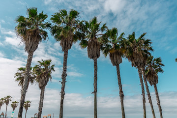 palm trees on the beach Wall mural