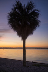 Heart shaped Palm tree at sunrise, Miami florida