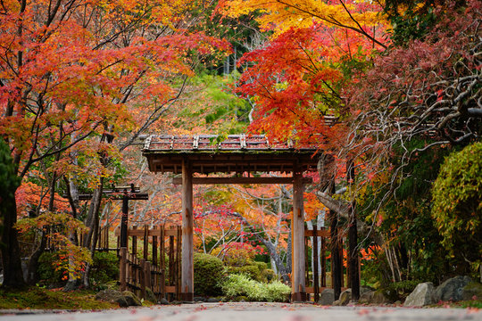 秋の松島、円通院の入り口