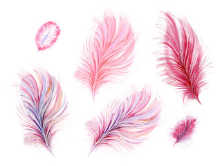 Set of pink watercolor feathers. Isolate on white background.