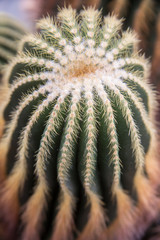 Macro of a Cactus at the Botanical Garden in DC