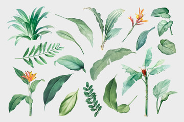 Tropical leaves and plants