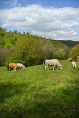 Landschaft in der Eifel