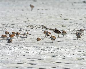 Birds resting in the open