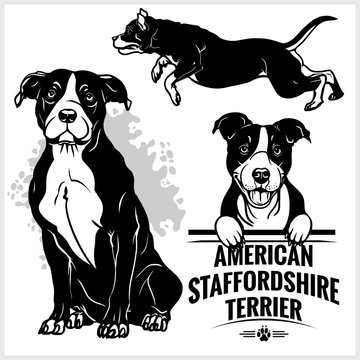 American Staffordshire Terrier dog - vector set isolated illustration on white background