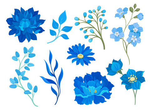 Collection of drawings of blue flowers and leaves. Vector illustration on white background.