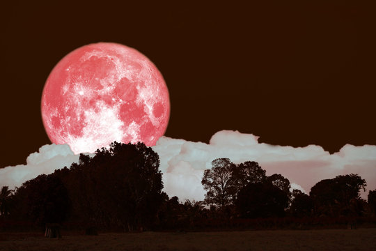 full hay moon on night sky back over silhouette forest