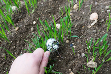 Listen to plants grow. Stethoscope on young plants. World Environment Day
