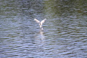fliegender vogel auf wasser