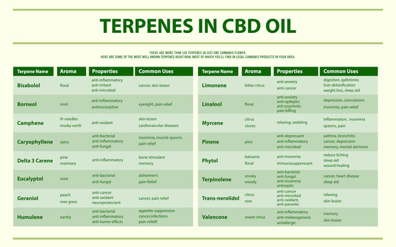 Terpenes in CBD Oil horizontal infographic illustration about cannabis as herbal alternative medicine and chemical therapy, healthcare and medical science vector.