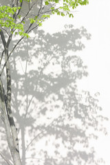 Wall Mural - shadow of a tree with a leafy crown on the wall. Leaf pattern. Blurred background.