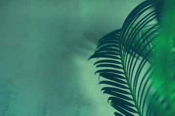 Green leaves of palm tree on dark green background