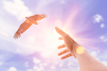 Man hand raised up want to catch eagle bird flying on sunset sky and clouds abstract background.