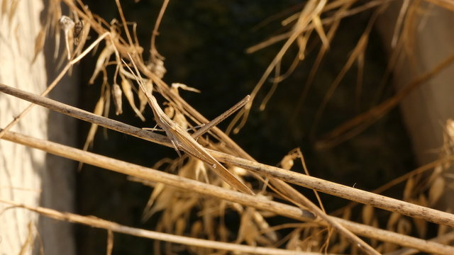Stick-insect