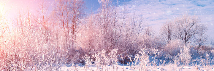 Fotobehang Lichtroze Banner 3:1. Winter landscape. Winter road and trees covered with snow. Sky and sunlight through the frozen tree branches. Copy space. Soft focus