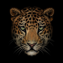 Color portrait of Jaguar/leopard looking forward on a black background.