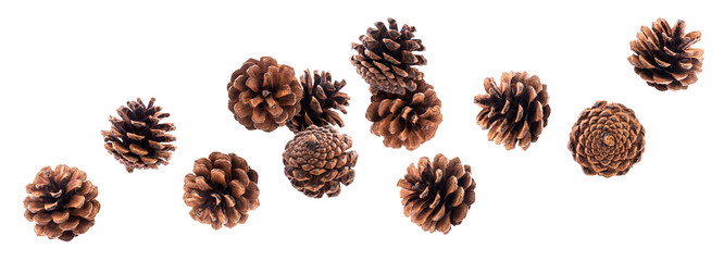 Falling pinecones isolated on white background with clipping path