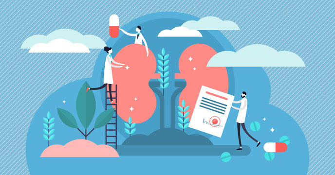 Nephrology vector illustration. Flat tiny kidney healthcare persons concept