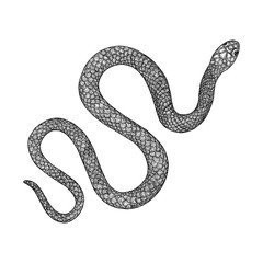 Snake drawing illustration. Black serpent isolated on a white background tattoo design. Venomous reptile, drawn witchcraft, voodoo magic attribute for Halloween.  Vector.