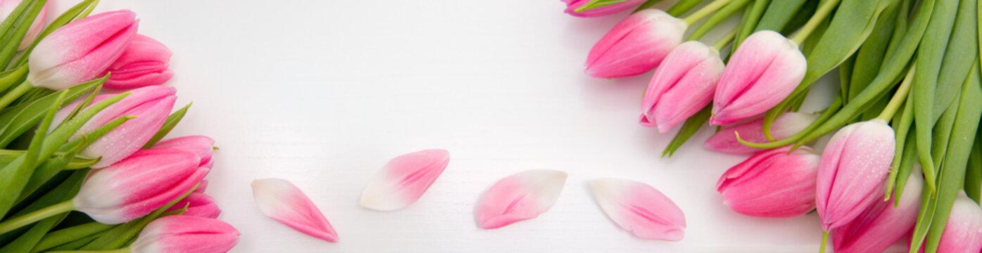 Pink tulips isolated on white wood Background. Celebrations background.