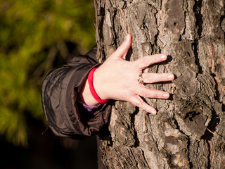 Hands of an unrecognizable woman hugging a tree