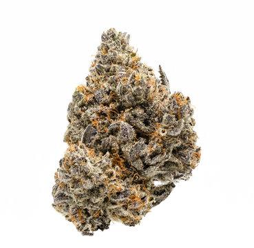 White Buffalo Cannabis Bud