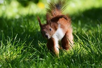 Squirell Eichhörnchen Eichhorn Nagetier Nager winken hallo kratzen putzig Tierportrait Natur Heimische Tiere