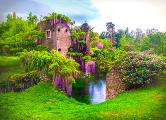 wisteria flowers in fairy garden of ninfa in Italy - medieval tower ruin surrounded by river