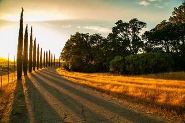 Sunset pine trees landscape