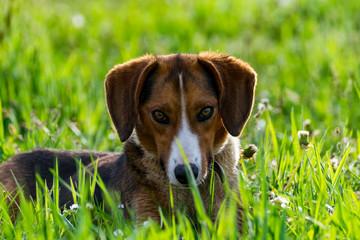 Ein Hund beim Spielen im Gras