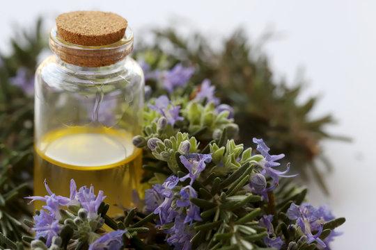 rosemary plant and rosemary oil in bottles