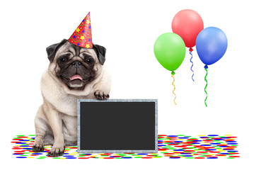 frolic smiling birthday party pug dog, with blackboard, confetti and balloons decoration, isolated on white background