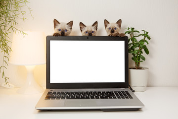 Laptop with blank screen on white table with kittins. Cut cats in home interior. Pats on office background. Сoncept on help and technical support.