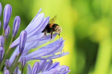 bee collecting pollen with copy space stock photo photograph image picture
