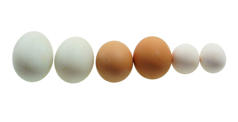close up on different size eggs isolated on white background